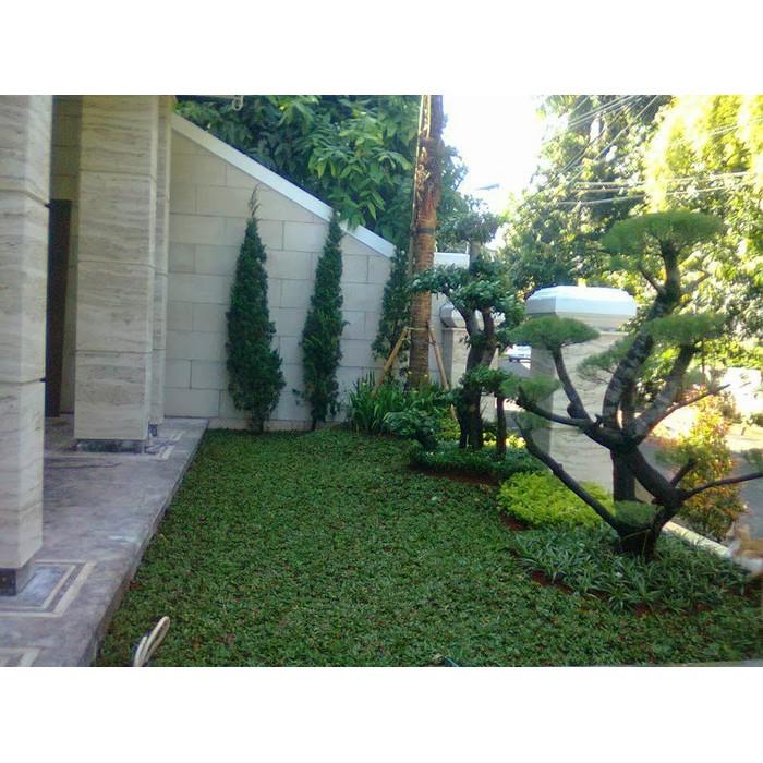 Desain Taman Minimalis Aneka Rumput Supplier Tanaman Hias