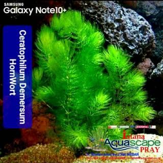 Toko Online Istana Aquascape Pray Shopee Indonesia