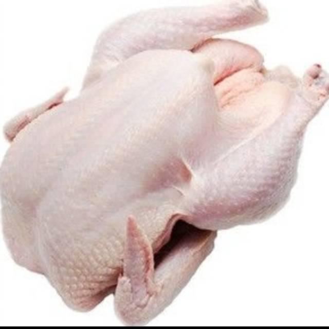 94 Gambar Ayam Utuh