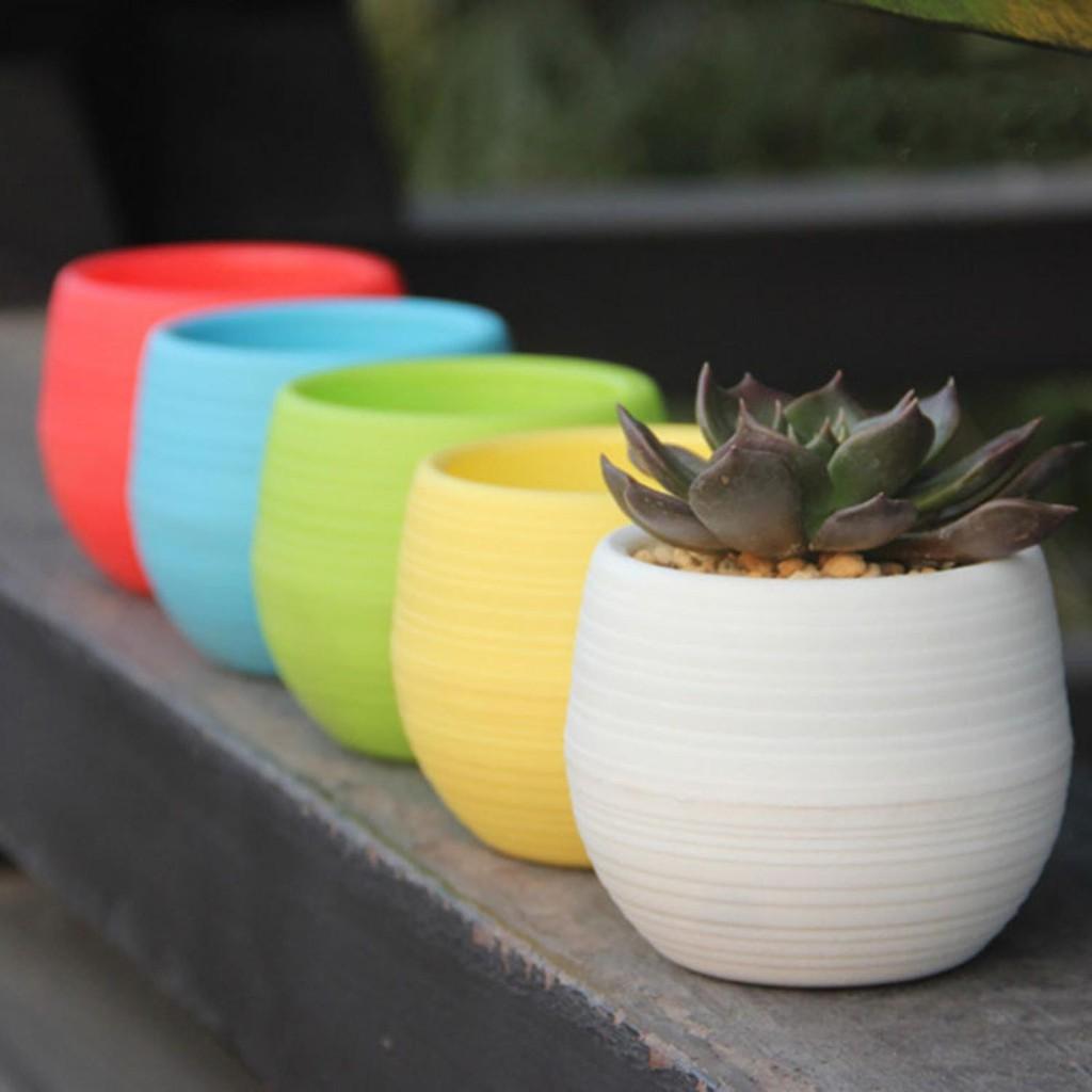Ksm Mini Pot Bunga Hias Kaktus Tanaman 5pcs Terbaik