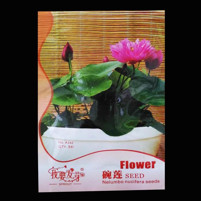 Lotus seed benih bunga teratai flower biji tanaman air aquascape taman | Shopee Indonesia