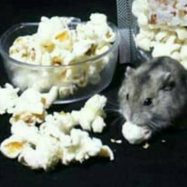 Makanan Hamster Popcorn Hamster Shopee Indonesia