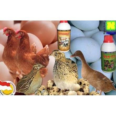 Best Promo Ayam Petelur Bebek Petelur Ternak Burung Puyuh Agen