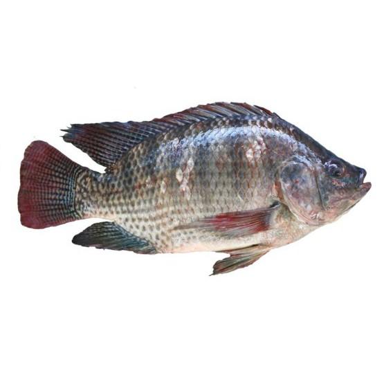 Ikan Mujair Per 200gr Shopee Indonesia