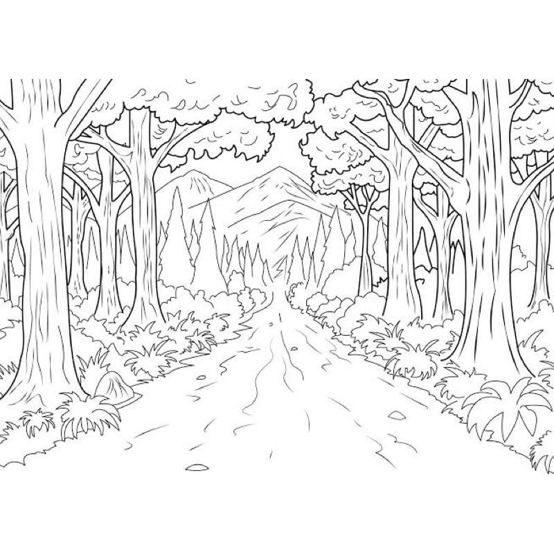 14 Mewarnai Pemandangan Hutan Paling Populer Lingkar Png