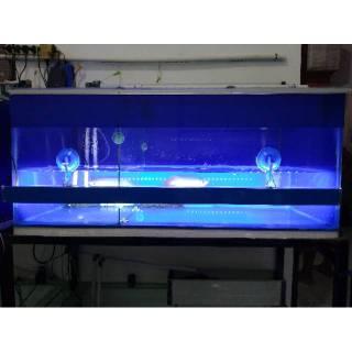 Lampu Aquarium Sun S Hipower Led Utk Tanning Ikan Arwana Louhan Aquascape Dll