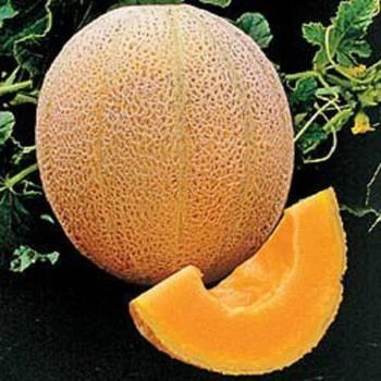 Hasil gambar untuk melon madu
