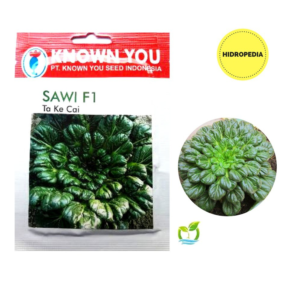 Benih Sawi Pagoda Tatsoi Ta Ke Cai Pack (5 Gr) - Known You Seed | Shopee Indonesia
