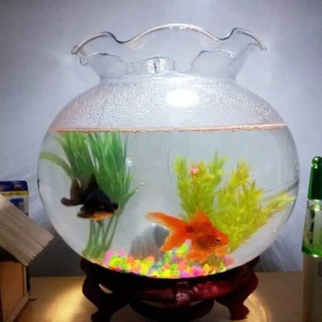 Fish Bowl 7 Liter Shella Aquarium Bulat 7l Toples Ikan Undian Akuarium Shopee Indonesia
