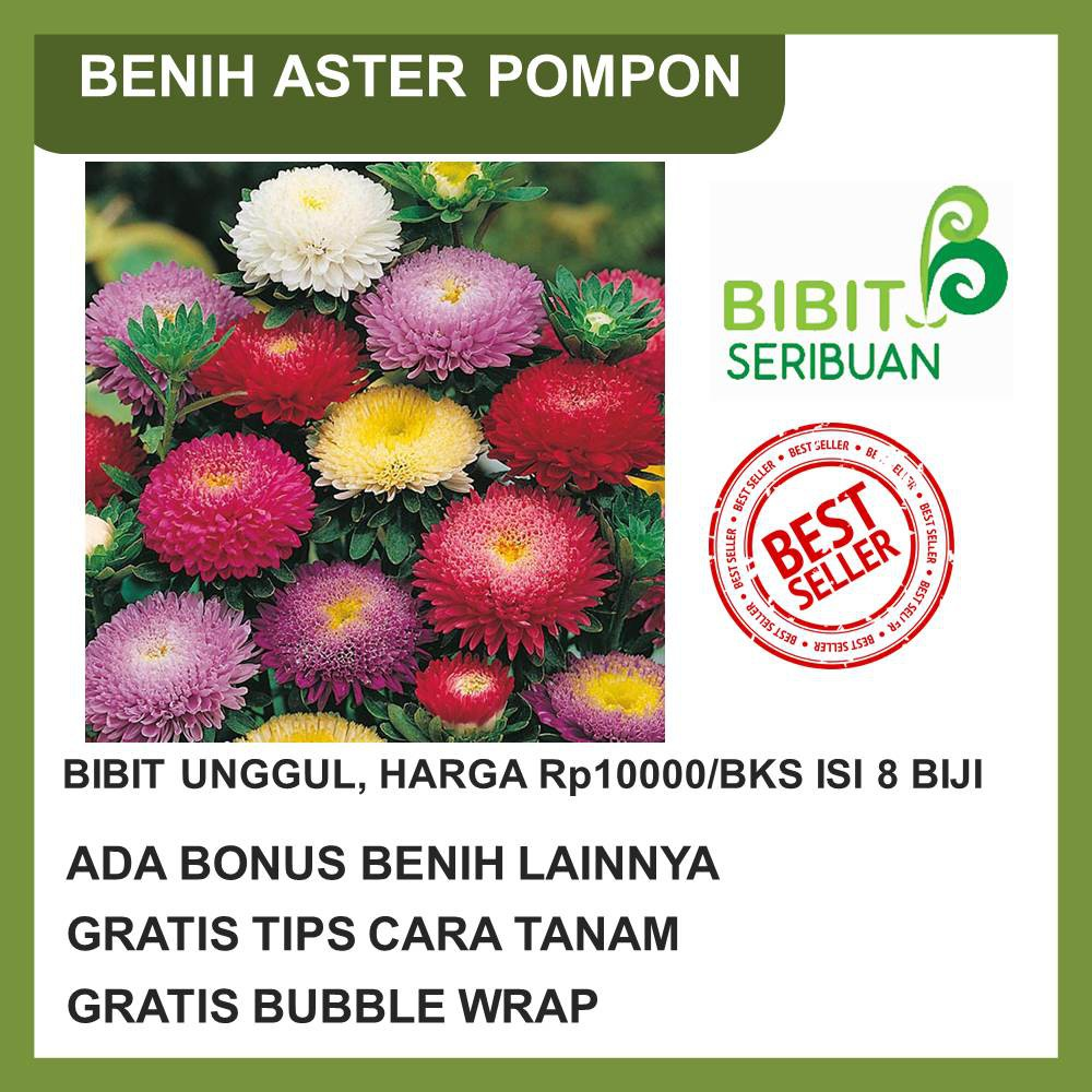 Harga Bibit Bunga Aster Terbaik Taman Perlengkapan Rumah November 2020 Shopee Indonesia