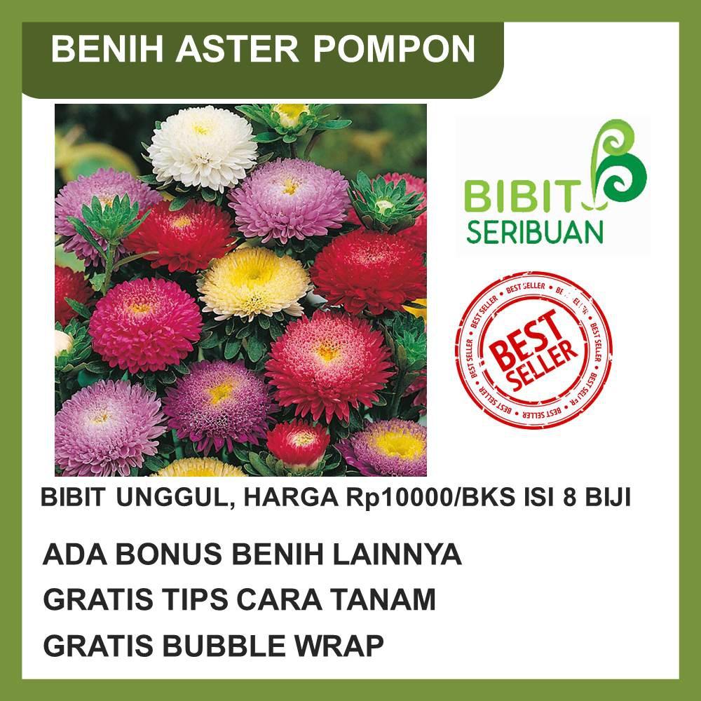 Grosir Benih Biji Bibit Bunga Aubrietia Rich Rose Import UK/Inggris QR0695 | Shopee Indonesia