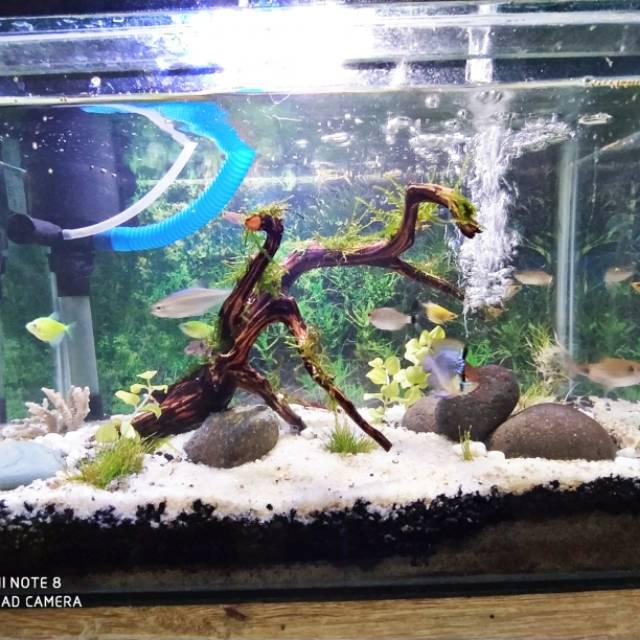 Aquarium Aquascape Jadi Kolam ikan hias free kirim hiasan Keluarga Aquarium bagus cantik