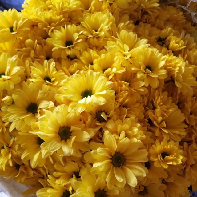 Bunga Aster Kuning Shopee Indonesia