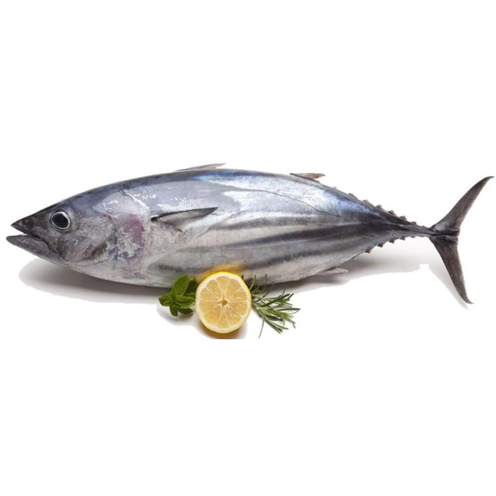 Ikan Tongkol Putih Cakalang Shopee Indonesia