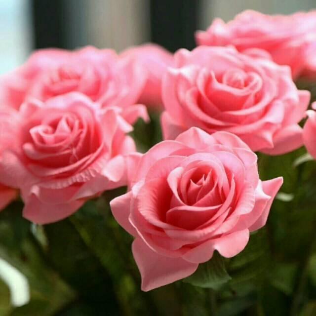 Bunga Mawar Pink Latex Shopee Indonesia
