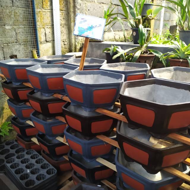 Pot Bonsai Semen Shopee Indonesia