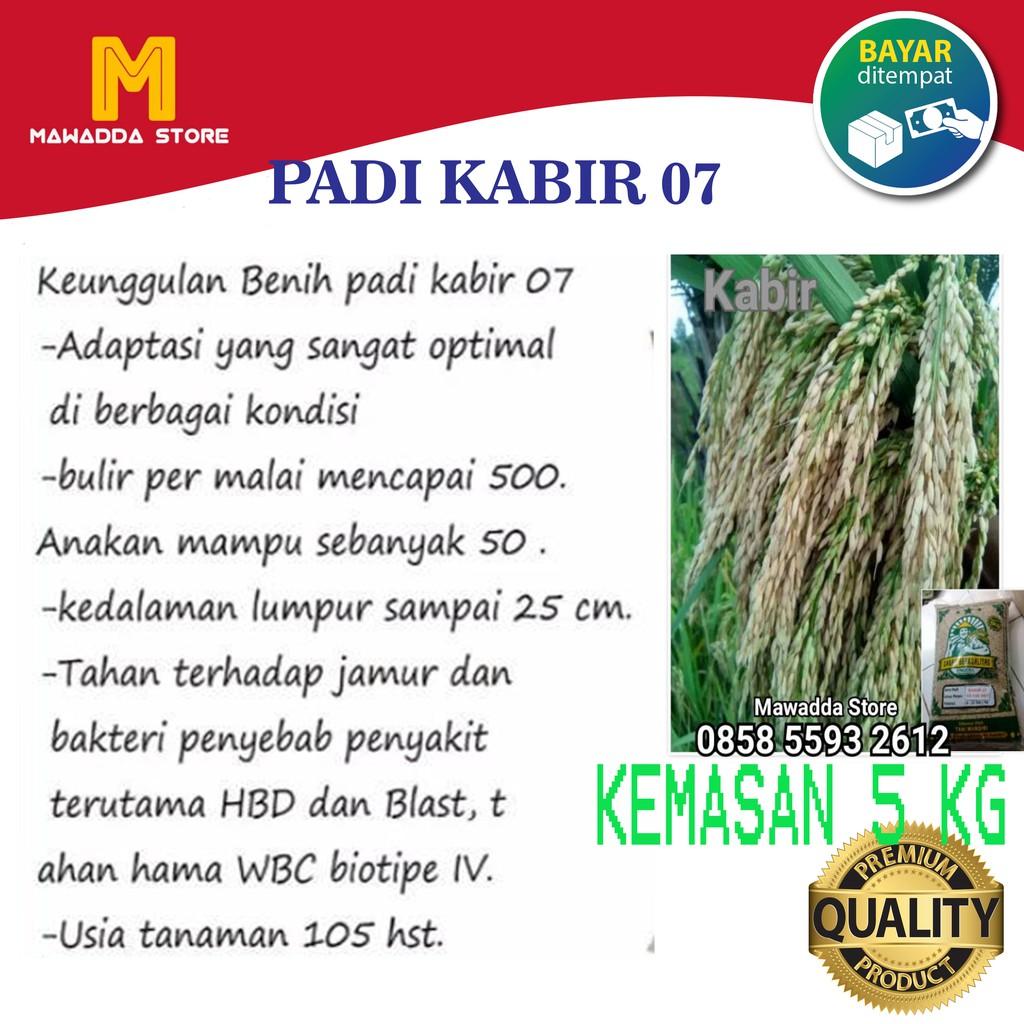Benih Padi Kabir 07 Bibit Unggul 5 kg