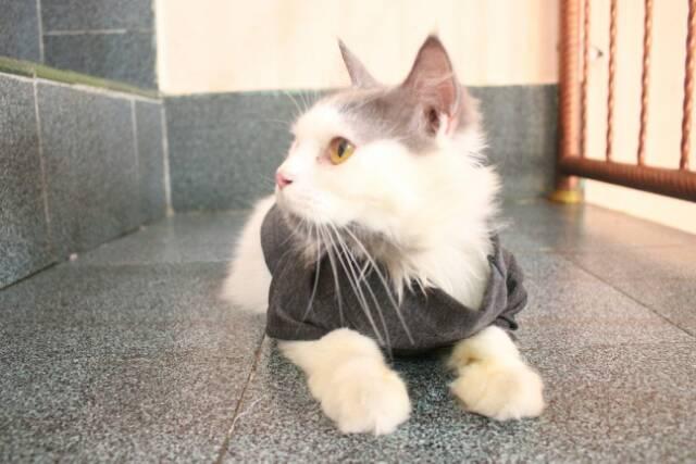 Kaos Ala Korea Turtleneck Untuk Kucing Aksesoris Dan Baju Kucing Murah Baju Lucu Hewan Shopee Indonesia