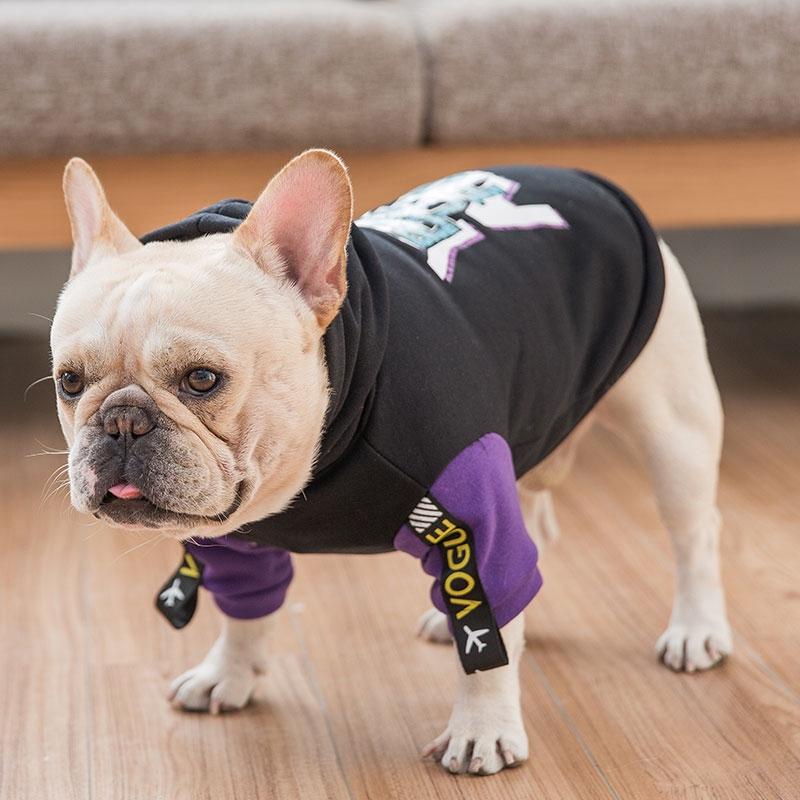 Gambar Anjing Bulldog Lucu