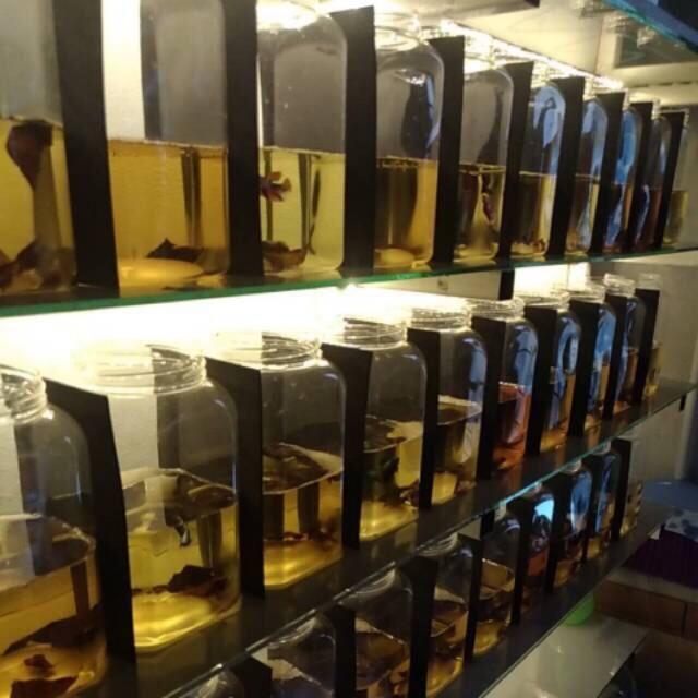 Sekat Toples Ikan Cupang 12x 18 Cm Busa Anti Air Shopee Indonesia