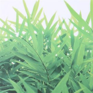 stiker dinding rumput hijau rumput bahan pvc untuk