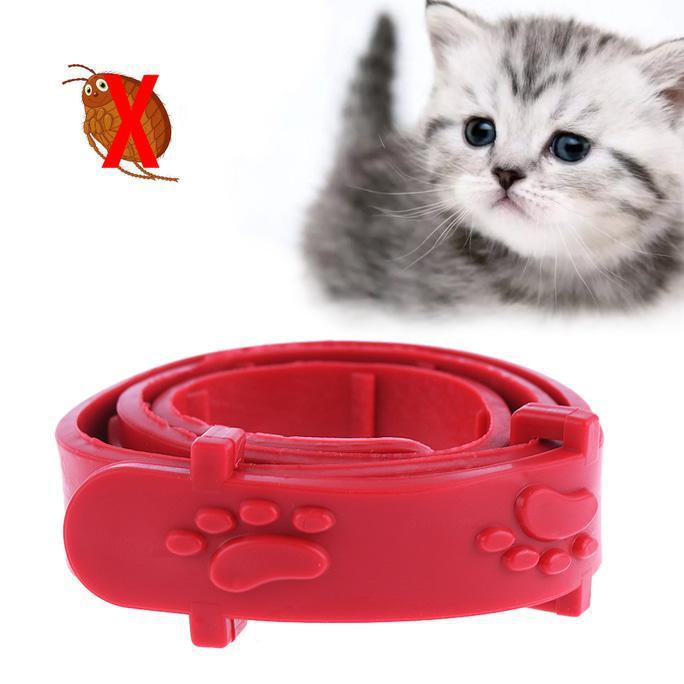 Corong Penutup - Collar Pelindung Leher Anjing Kucing Kelinci No5 ,..,.,.., | Shopee Indonesia