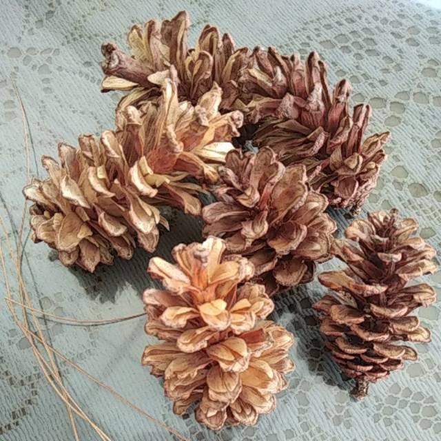 Bunga Pinus Warna Alami Bagus Natal Kerajinan Tangan Bunga Kering Cemara 3 Cm 7 Cm Shopee Indonesia