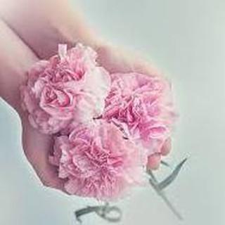 Bunga Anyelir Carnation Plastik Murah - Daftar Harga Terbaru dan ... 884aae9fb2