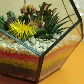 terrarium kaktus & sukulen, terrarium, terarium, terrarium