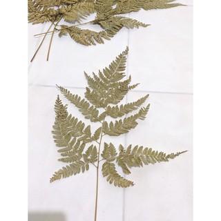 daun pakis kering untuk buket bunga, souvenir, hiasan