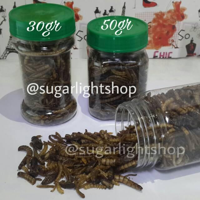 Mix Bugs Campuran Serangga Kering Makanan Hewan Peliharaan Sugar