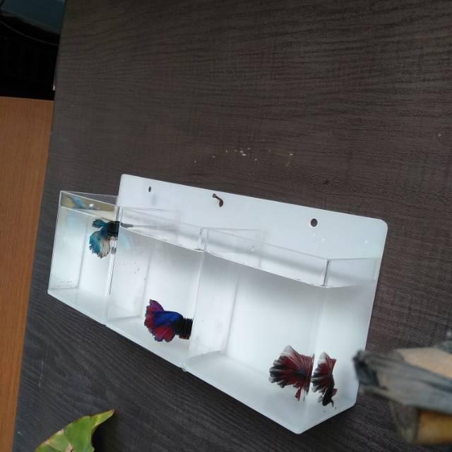 Aquarium Gantung Dinding Mini Ikan Cupang 3 Kamar Shopee Indonesia