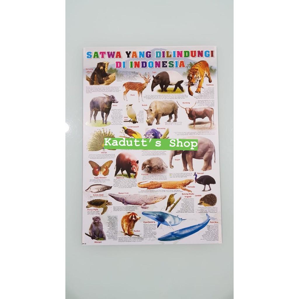 Ready Stok Poster Edukasi Hewan Binatang Langka Dilindungi Animal