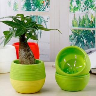 pot bunga mini hias kaktus tanaman 5pcs dekorasi rumah