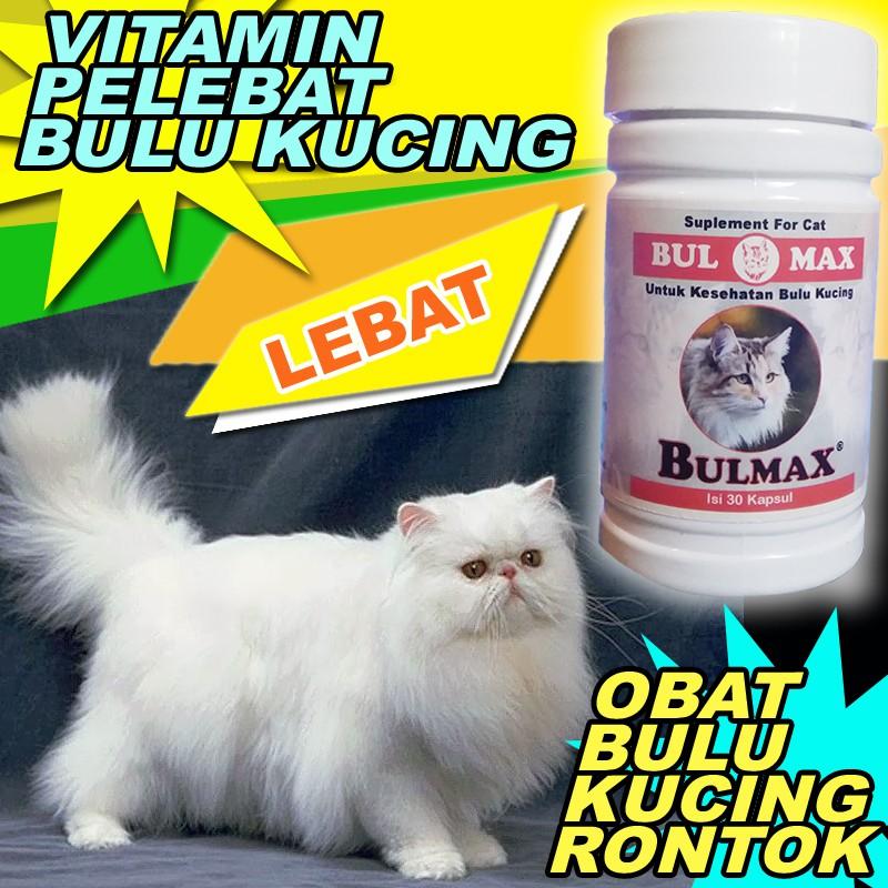 Bm06 Obat Rontok Kucing Vitamin Pelebat Bulu Kucing Anti Rontok Bulmax Penumbuh Bulu Kucing Rontok Shopee Indonesia