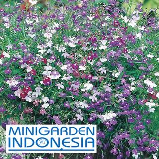 50 Benih Bunga LOBELIA Cascade mawar Mixed Mr Fothergills F1 bibit tanaman hias