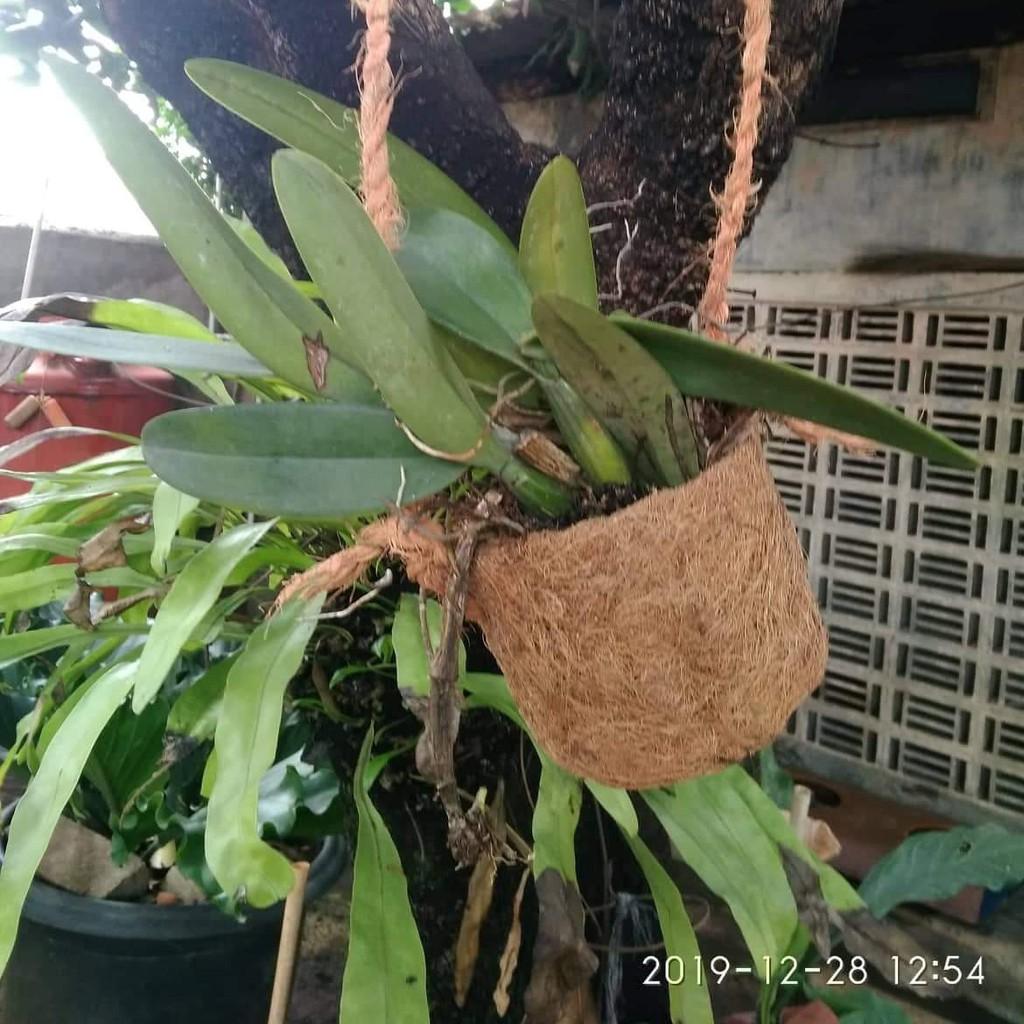 Pot Anggrek Bunga Gantung Bonsai Pot Sabut Serabut Kelapa