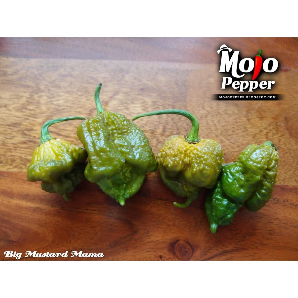 Amefurashi Benih / Bibit / Seed Cabe Big Mama Mustard Hot Pepper Super Spicy   Shopee