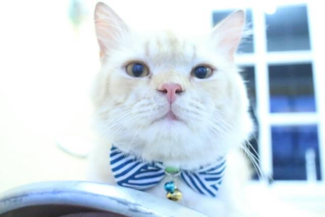 Dasi Kupu Kupu Untuk Kucing Anjing Baju Kucing Lucu Aksesoris Hewan Size Kitten Adult Shopee Indonesia