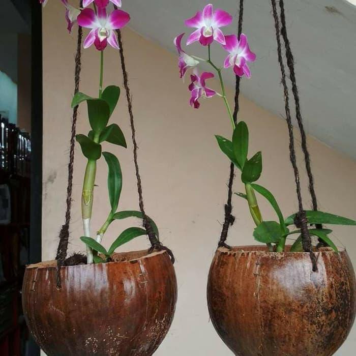 anggrek | tanaman hias gantung