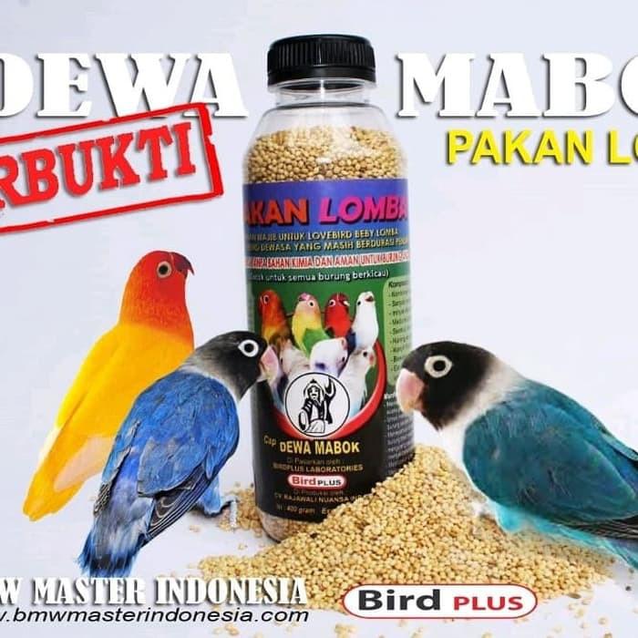 Jual Pakan Lovebird Lomba Dewa Mabuk Mabok Bagus Buat Lovebird Baby Shopee Indonesia