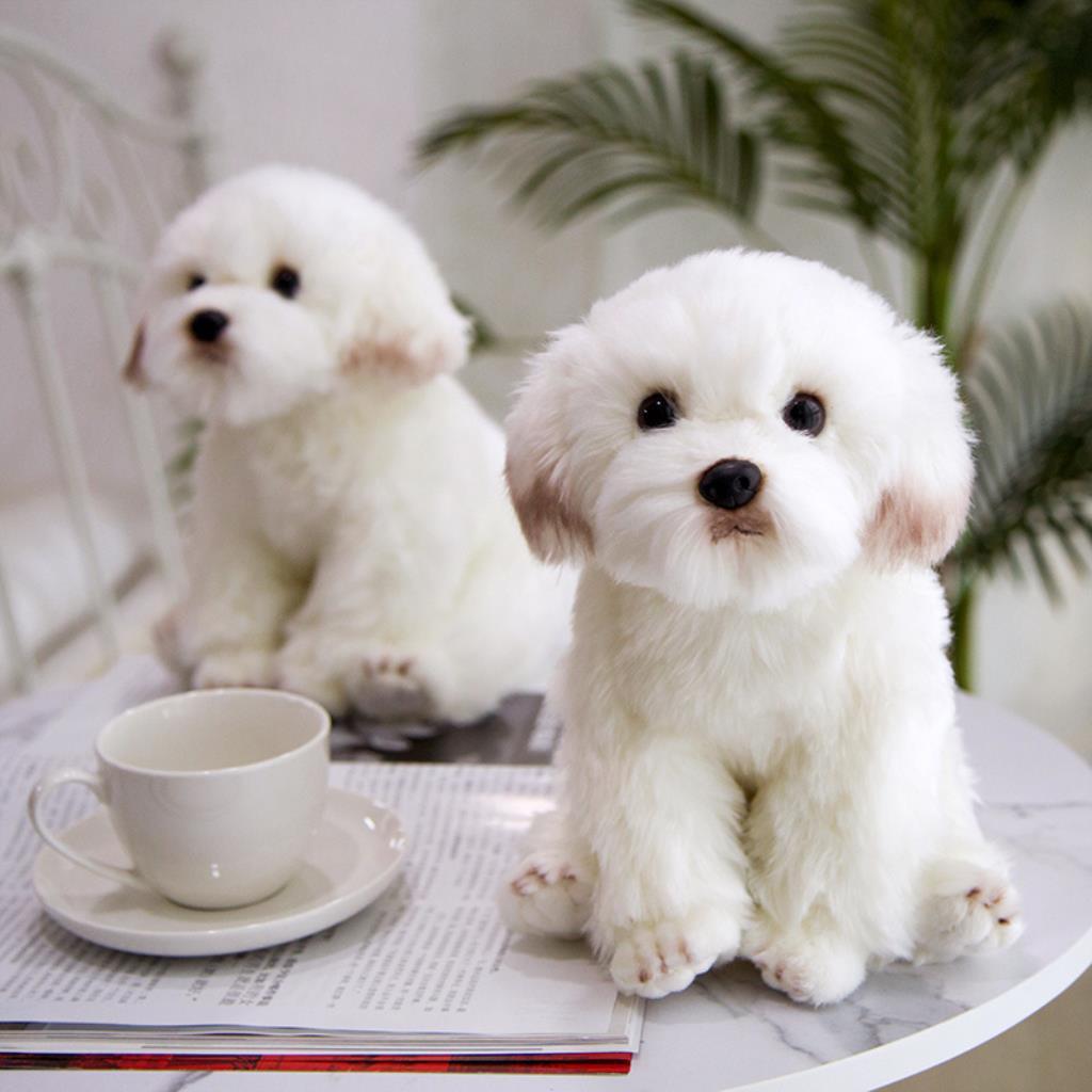 Mainan Boneka Stuffed Plush Simulasi Anjing Maltese 3d Untuk Anak Shopee Indonesia