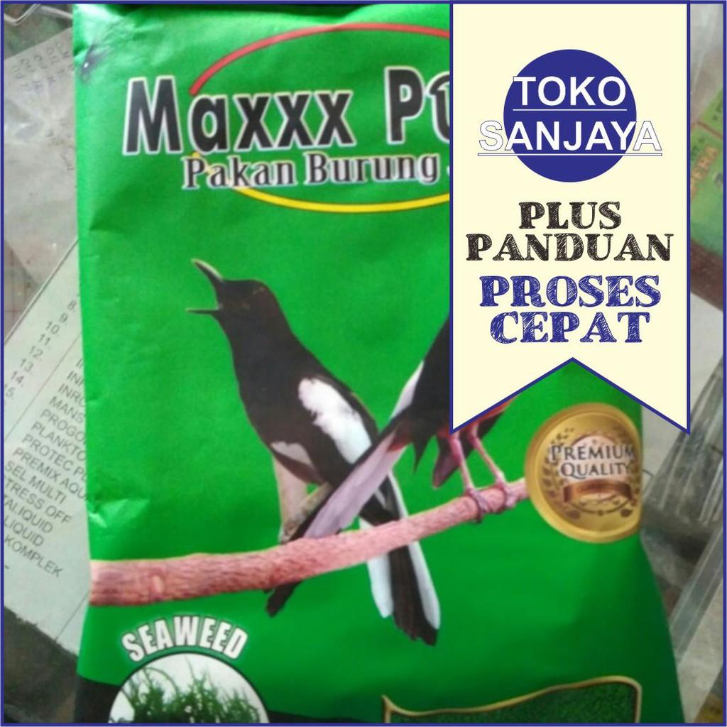 Maxxx Power Murai Pakan Harian Burung Kacer Murai Anies Jalak Suren Shopee Indonesia