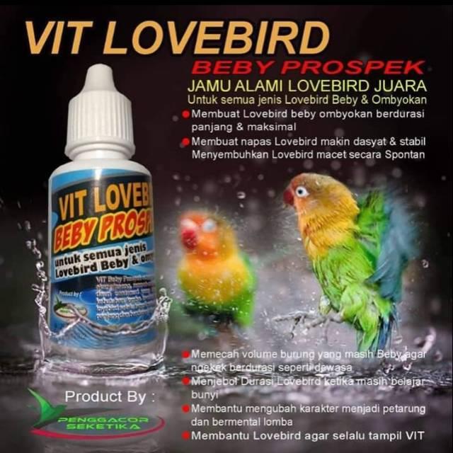 Vitamin Lovebird Beby Prospek Shopee Indonesia