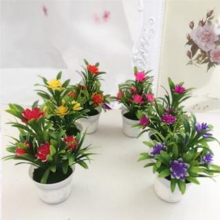 tanaman pot mini bonsai lotus rumah hiasan ornamen bunga