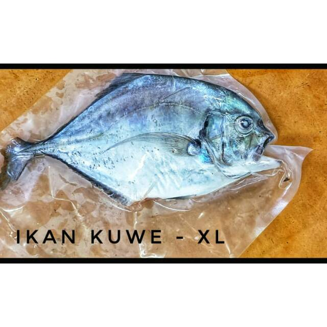 Ikan Kuwe Xl Shopee Indonesia