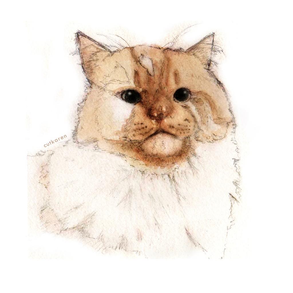 Lukisan Tangan A5 Hewan Peliharaan Gambar Sketsa Kucing Anjing