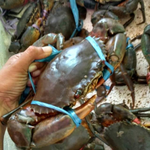 Hasil gambar untuk harga kepiting segar