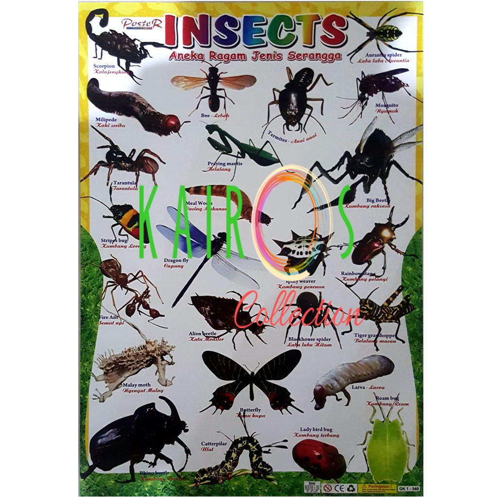 Poster Serangga Insects
