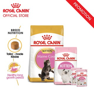 Royal Canin Kitten Maine Coon Makanan Anak Kucing Dry 2kg & 2 Wet Food & 1 400gr | Shopee Indonesia